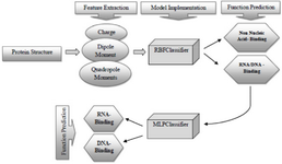 <p>Figure 4. The overall workflow for practical implementation. Firstly, the query protein is represented numerically by three kinds of features. Secondly, the first round of the classification is done using the best-selected classifier trained on combined full dataset (i.e. the RBFClassifier). Thirdly, if the function of query protein was predicted as nucleic acid-binding (or RNA/DNA-binding), the second round of the classification is attempted based on the best-selected classifier trained on the nucleic acid-binding proteins dataset (<em>i.e</em>. the MLPClassifier). The final predicted function identifies the query protein as either RNA-binding or DNA-binding. Abbreviations: MLPClassifier, Multilayer Perceptron Classifier; RBFClassifier, Radial Basis Function Classifier.</p>