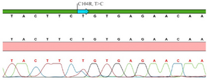 <p>Figure 1. Sanger sequence chromatogram view of <em>TNFRSF13B/TACI</em>&nbsp; gene C104R (T&gt;C) mutation of patient 1.</p>