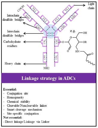 Antibody-Drug Conjugates: Possibilities and Challenges - AJMB