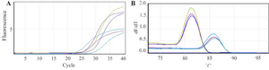 <p>Figure 4. A) Amplification curves and; B) melt curve analysis of <em>CCR5</em> and <em>GAPDH</em> genes as target and control genes, respectively revealed melting peaks at 86<em>°C</em> for <em>CCR5</em> gene and 83<em>°C</em> for <em>GAPDH</em> gene and the representative amplification with <em>gene specific primers.</em></p>