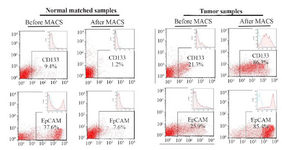 <p>Figure 1. Flow cytometry assay of tumor cells and their matched normal cells isolated using a Magnetic-Activated Cell Sorter (MACS). Tumor cells showed high rates of expressions for cancer-stem like cell markers (<em>i.e</em>. CD133 and EpCAM). Results are presented as mean&plusmn;SD (n=8).</p>