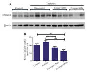<p>Figure 1. Effect of hydroalcoholic ginger extract on the protein levels of HMG-CoA reductase in the brain. A) Representative immune-blotting showing specific bands for HMG-CoA reductase. &beta;-actin is used as an internal control. B) Graphic presentation of data obtained from western blot analysis. Each bar shows mean&plusmn;SD. Significant difference from diabetic group was shown as p&lt;0.05. From left to right, lanes 1, 2, and 3 are related to control; lanes 4, 5, 6, and 7 are related to diabetic group (DM) without any treatments; lanes 8, 9, and 10 are related to diabetic group receiving 200 <em>mg/kg</em> ginger extract; and lanes 11, 12, and 13 are related to diabetic group receiving 400 <em>mg/kg</em> ginger extract, respectively.</p>