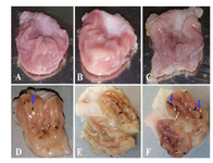 <p>Figure 1. The macroscopic appearance of the stomach from (A, B) normal control, (C) control receiving CMC and (D-F) indo-methacin-induced gastric ulcer rats. Arrows show linear and focal hemorrhagic areas.</p>