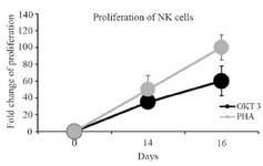 <p>Figure 2. Linear chart shows the comparison of NK cells proliferation stimulated with PHA and OKT3 between days 0, 14 and 16.</p>