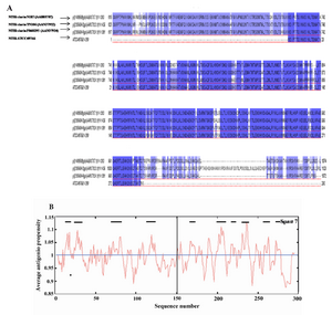 Figure 6. Sequence analysis of Cell Binding Domain of HapS from different NTHi strains. A) Sequence alignment of 3 different CBD amino acid reference sequences with the CBD sequence employed in this study (The fourth row). The CBD sequences were obtained from the NCBI gene bank database (accession numbers are shown). Identical and conserved amino acid residues are shown in black background and similar amino acids are shown in gray background; B) The CBD (amino acid 1�300) antigenicity plot of this study according to the Kolaskar and Tongaonkar method. The residues above the threshold level are hydrophilic. Threshold was set up for 8 residues
