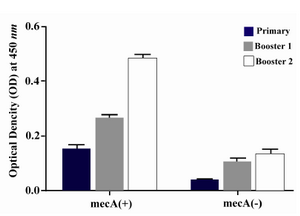 Figure 5. Presence of specific antibodies anti-PBP2a in the sera of mice immunized with the recombinant protein vaccine and the negative controls after each course of immunization. Data presented as mean ±S.D of experimental group (n=14)