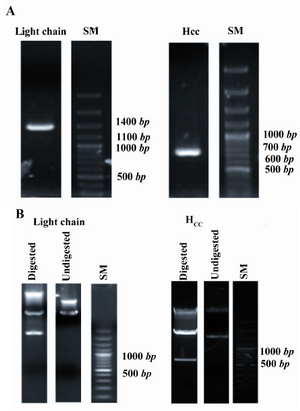 products cloning markers restriction enzymes kpni