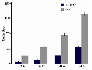 Figure 5. Cell growth behavior in HEK 293T and HepG2 cell lines measured by ImageJ software
