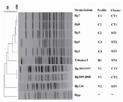 Figure 3. Genomic analysis of B. pertussis using PFGE. The dendrogram shows PFGE profiles of clinical isolates (C), vaccine strains (V), and reference strain Tohama I (R1). 