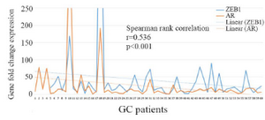 <p>Figure 2. Relationship between AR and ZEB1 expression in GC samples using Spearman rank test.</p>