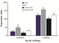 "<p><strong>Figure 2.</strong> Effect of Ang II supplementation in culture medium during IVM and IVC (day 4) on expression of &alpha;<sub>1</sub> and &beta;<sub>1</sub> Na<sup>+</sup>/K<sup>+</sup>/ATPase subunits in embryos derived from vitrified and fresh oocytes. Mean fluorescence intensity was measured&nbsp;by manually outlining the embryos with&nbsp;ImageJ 1.37 <span style=""font-style: normal !msorm;""><em>v</em></span> software. The values are expressed as mean&plusmn;SEM. For each Na<sup>+</sup>/K<sup>+</sup>/ATPase subunit, bars with different lowercase letters indicate significant difference between experimental groups ( IVM, D4, and control; p&lt;0.05).</p>"