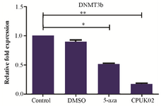 <p>Figure 2. The effect of CPUK02 on DNMT3b expression.</p>