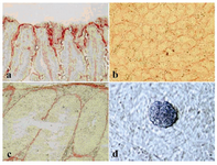 Figure 3. Alkaline phosphatase reactivity