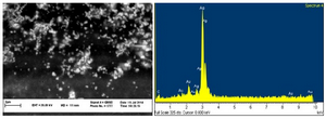 <p>Figure 3. SEM micrograph of silver nanoparticles (left), EDS results indicating sharp peak for silver (Ag<sup>0</sup>).</p>