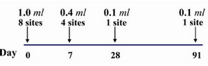 Figure 1. Details of the eight site intradermal rabies post exposure vaccination regimen (PCECV and HDCS)