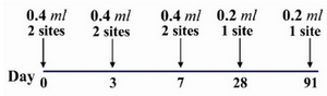 Figure 2. Details of the two site intradermal rabies post exposure vaccination regimen (PCECV and HDCV)