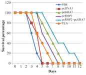 <p>Figure 3. Survival curves of immunized BALB/c mice after lethal challenge with 5×10<sup>4 </sup>tachyzoite forms of RH <em>T. gondii</em> strain, 4 weeks after the last immunization. Each group has six mice.</p>