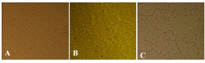 <p>Figure 1. Cytopathogenicity of MDCK cells to H9N2 influenza virus infection: A) mock, and at 24, B) and 48, C) hours post infection (100x).</p>