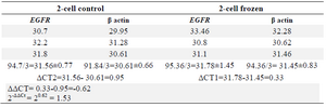 <p>Table 1. Data analysis results of <em>EGFR</em> expression in 2-cell group</p>