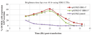 <p>Figure 2. The  comparison of cell transfection and fluorescence intensity of each mRNA over time. Constructs with HBG-3′ UTRs have the highest fluorescence level 20 <em>hr</em> post- transfection.</p>