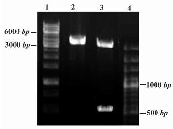 how to fix incomplete digestion of restriction enzymes