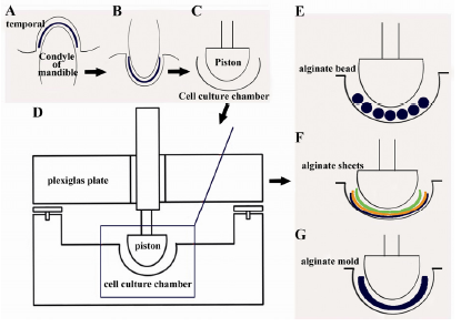 thesis online on plant tissue culture The major impact of plant tissue culture will not be felt in the area of micropropagation, however, but in the area of controlled manipulations of plants at the cellular level in ways which have not been possible prior to the introduction of tissue culture techniques.