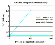 Figure 5. Alkaline phosphatase release assay. The purified monomer did not show any significant biological activity similar to the commercial BMP-7-His. As positive control, commercially available rhBMP-7 produced in CHO cells was used.  Each value is the mean of triplicates shown±SD