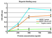 Figure 6. Heparin binding assay of BMP-7-His and B2BMP-7. The results showed dose-dependent binding of commercial BMP-7-His and its mutant to heparin. The background binding related to the non-heparin coated wells as negative control was considerably lower. Each absorbance value is the mean of triplicates shown±SD